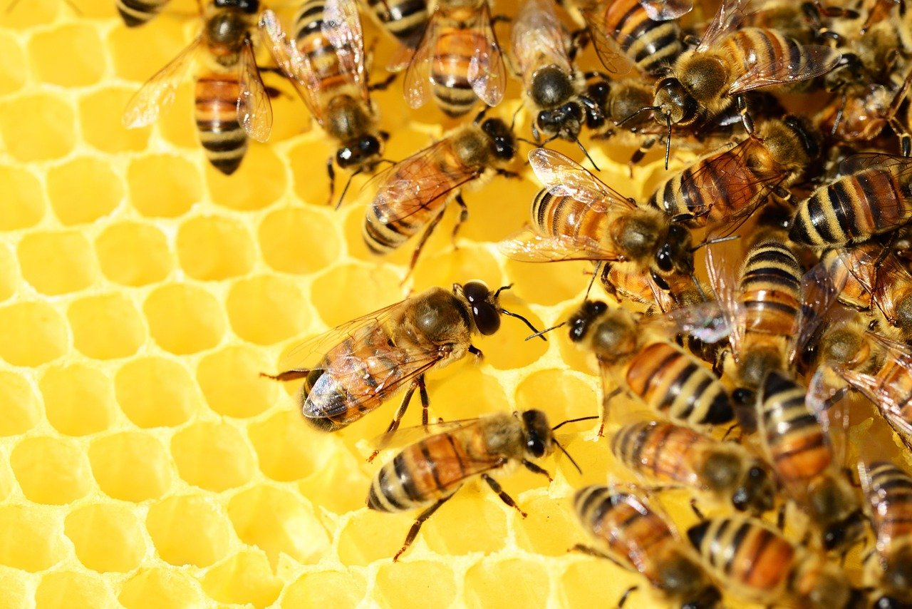 bees, hive, insects-326337.jpg