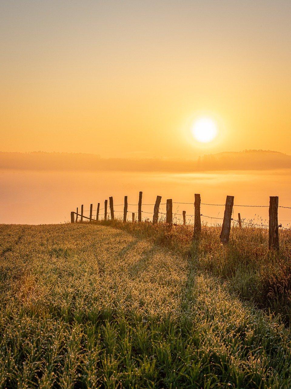 sunset, field, fence-6303992.jpg
